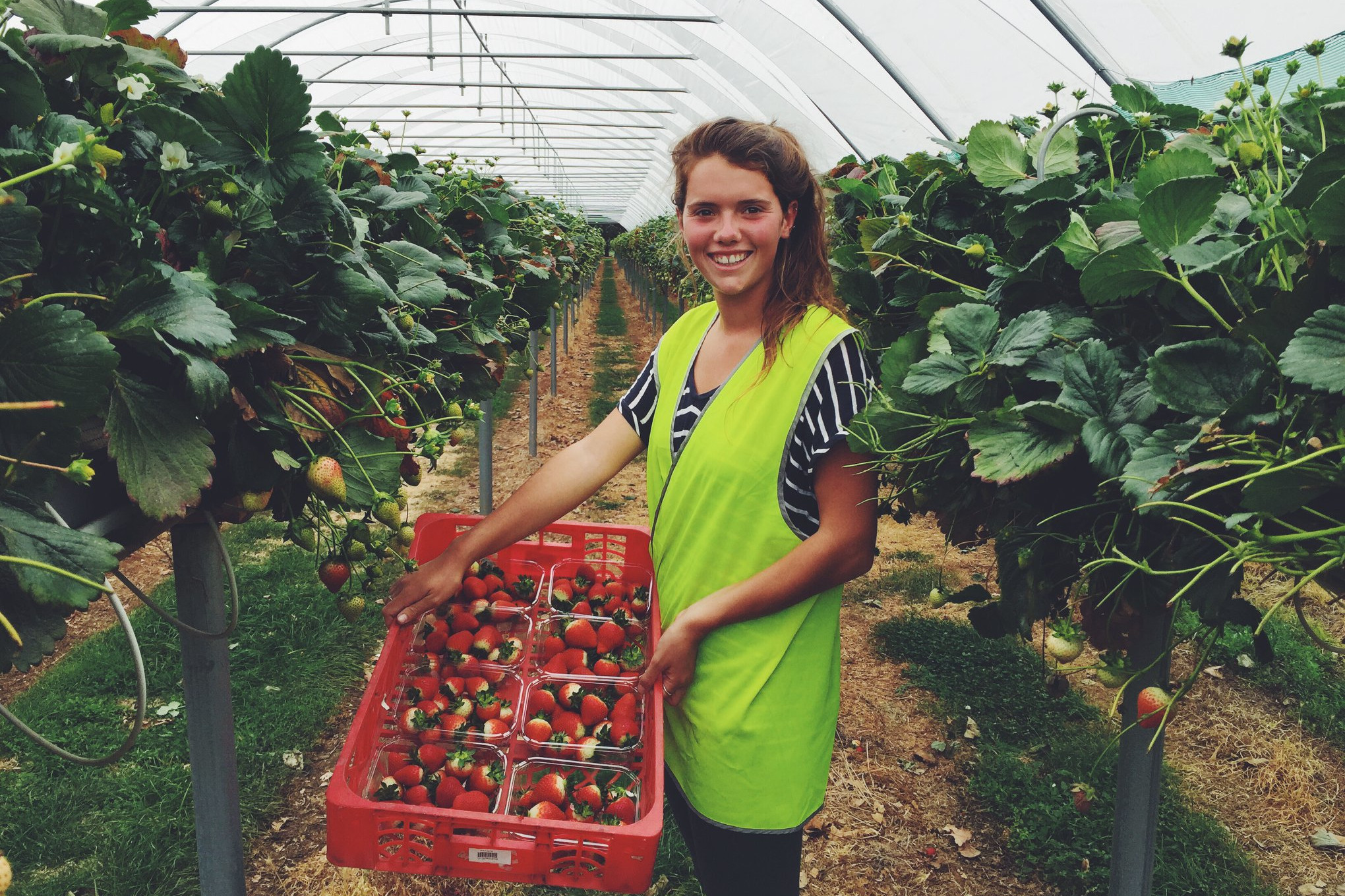 Priscilla, working holiday maker and queen of the strawberries