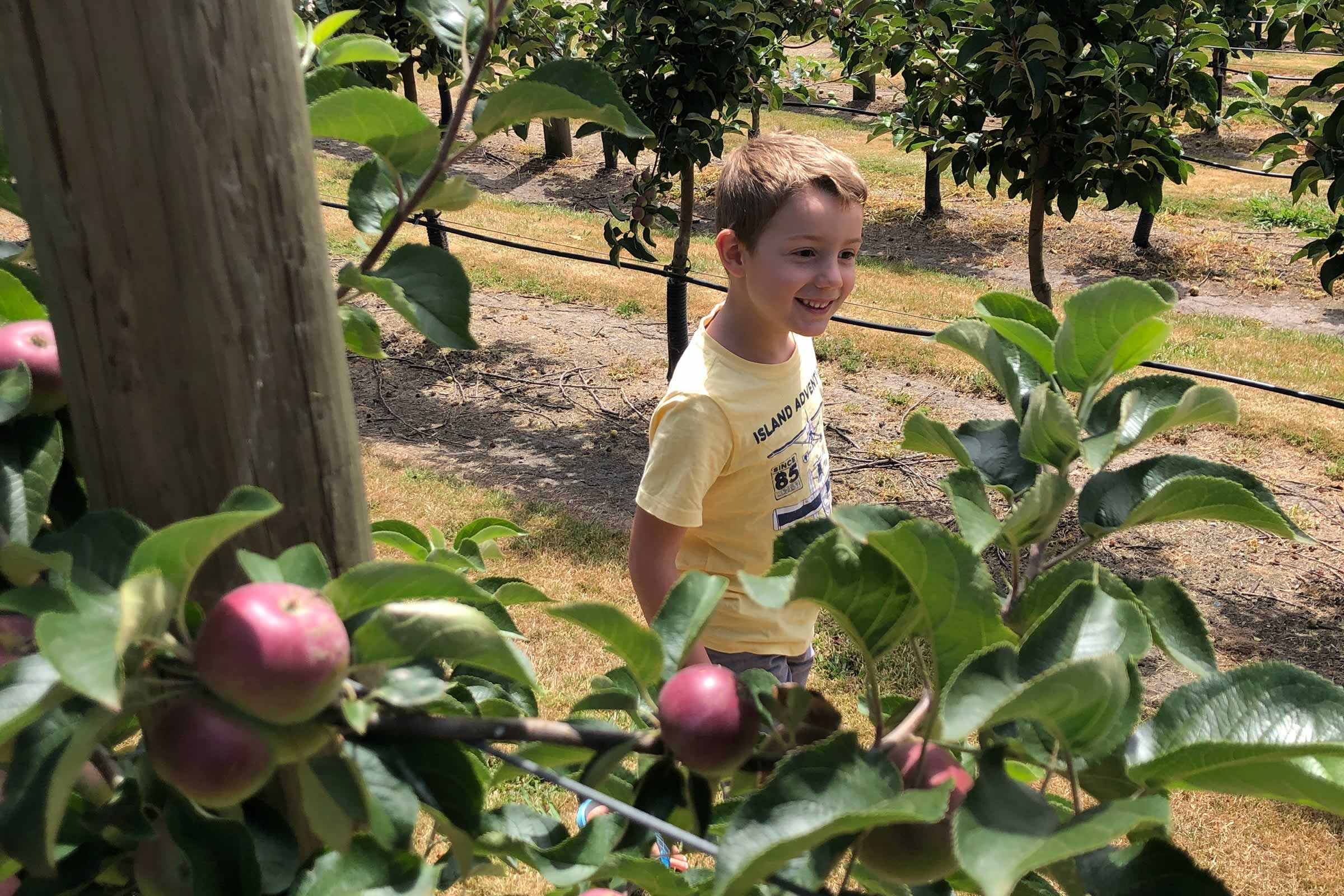 All smiles walking through the apples at Spreyton Cider Co.